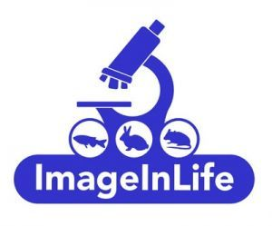 """Image In Life"" – new European project at STUBA"